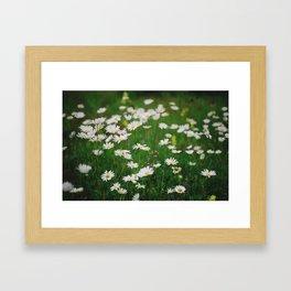 Сamomile Framed Art Print
