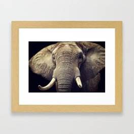 Elephant portrait Framed Art Print
