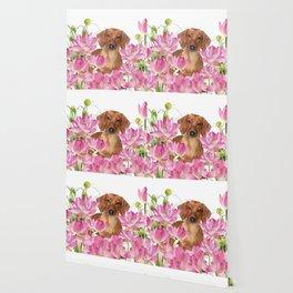 Dog in Field of Lotos Flower Wallpaper