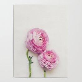 Pink Peonies 2 Poster