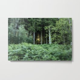 Sunrise through the spruce wood Metal Print