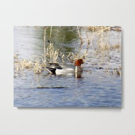 Ducks on Marsh Metal Print