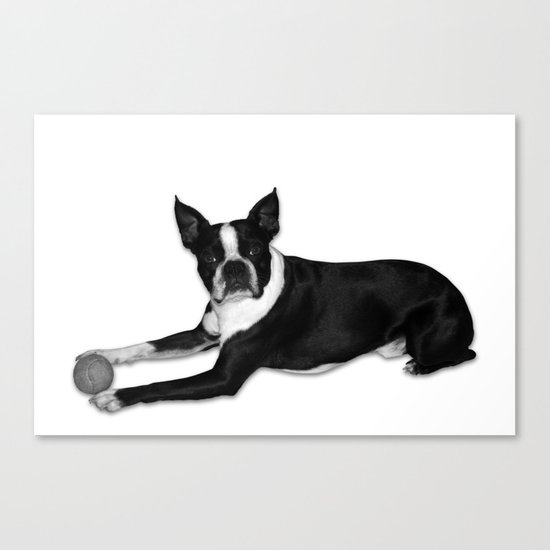 Fetch Boston Terrier B/W Canvas Print