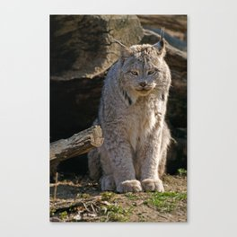 I Am Watching You Canvas Print