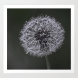 Dandylion Art Print