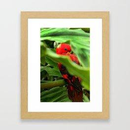 Red Lory Framed Art Print