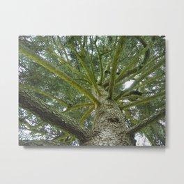 To The Trees Metal Print