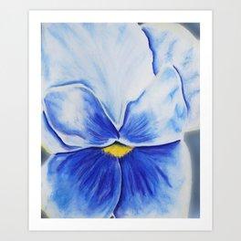 Pansy Blues Art Print