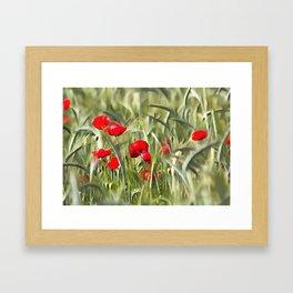 Corn Poppies Framed Art Print