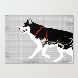 Black Siberian Husky Dog Art Canvas Print