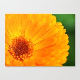 orange flower. macro Canvas Print
