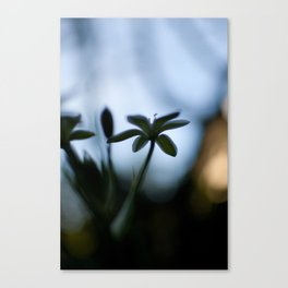 looking towards spring Canvas Print