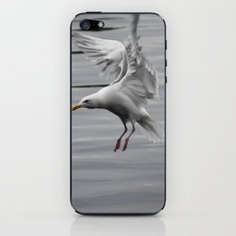 Landing Gull iPhone Skin
