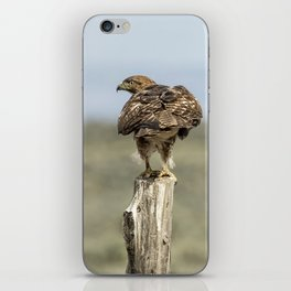Red-Tailed Hawk Preparing to Fly iPhone Skin