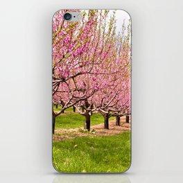 Pink Flowering Trees iPhone Skin