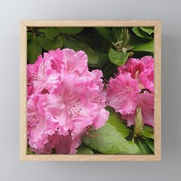 Rhododendron After Rain Framed Mini Art Print