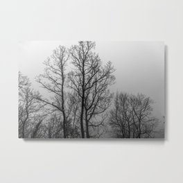Black and white naked trees Metal Print