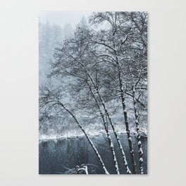 Snow Falling on a Tree Canvas Print