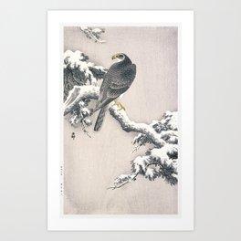 Goshawk on Snow-covered Pine Bough by Ohara Koson (1877-1945) Art Print