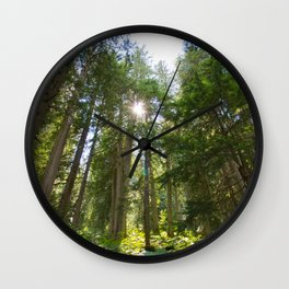 Life, Giant Cedar Trees Wall Clock