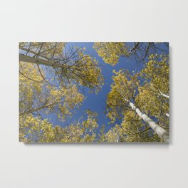 Aspens in the Sky! Metal Print