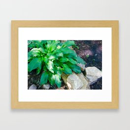 Natures Moments, Hasta. Framed Art Print