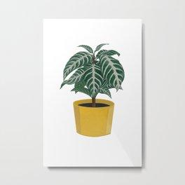 Zebra houseplant Metal Print