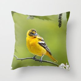 Baltimore Oriole Bird Throw Pillow