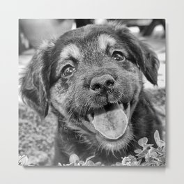 Little black puppy Metal Print