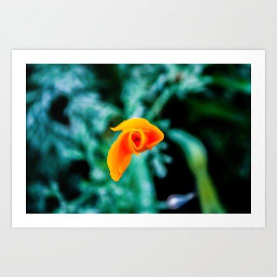 Goldfish Poppy Art Print