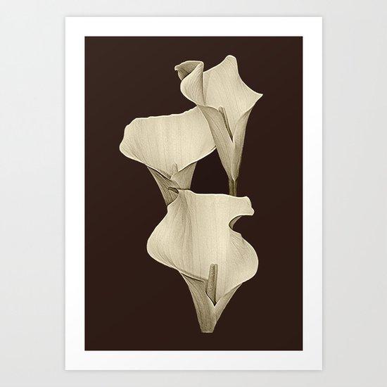 Cream Calla Lilly. Art Print