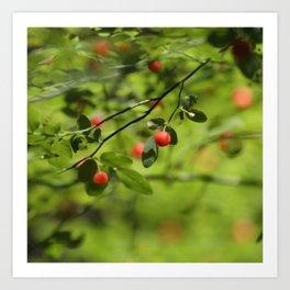 Wild Berries Art Print