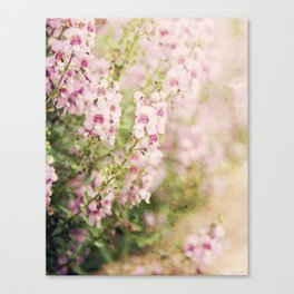 Flowering Path Canvas Print