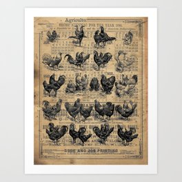 Vintage Chicken Study from 1895 Dictionary on Lancaster, PA antique almanac page Art Print