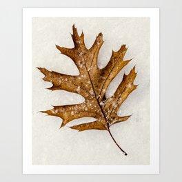 a leaf in the snow Art Print
