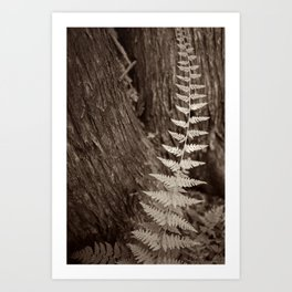 Single Copper Fern Art Print
