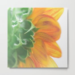 Seek the Light - Sunflower Photography Metal Print