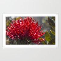 Hawaiian Flower Art Print
