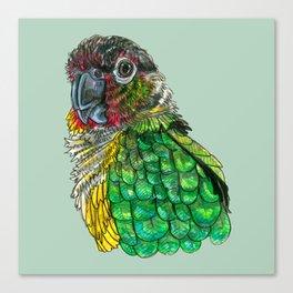 Green Cheeked Conure Canvas Print