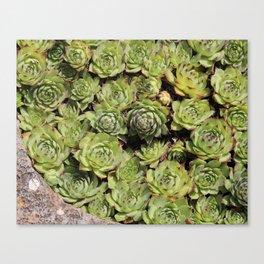 Succulent Dream Canvas Print