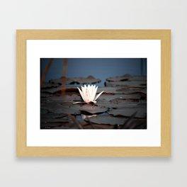 flower of the lake Framed Art Print
