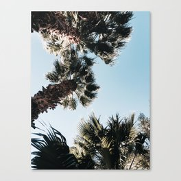 Among the Palms Canvas Print