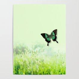 Green Butterfly, Wildflower Meadow, Summer Field Poster