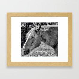 Bw Joey Framed Art Print