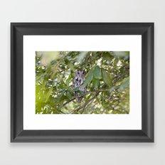 Screech Owl 2 Framed Art Print