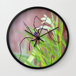 Spider in the Garden Wall Clock