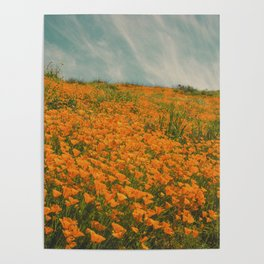California Poppies 016 Poster