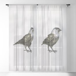 Western jackdaw Sheer Curtain