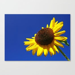 Sunflower to the sky Canvas Print