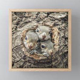 Peekaboo Baby Squirrels  Framed Mini Art Print